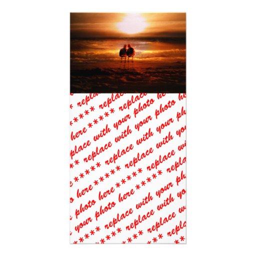 Gaviotas de la puesta del sol - pájaros del amor e tarjeta personal con foto