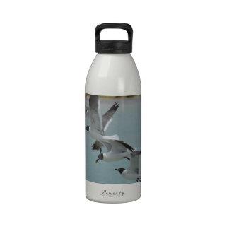 Gaviotas de risa que vuelan botellas de agua reutilizables