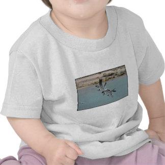 Gaviotas de risa que vuelan camiseta