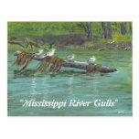 Gaviotas del río Misisipi Tarjetas Postales