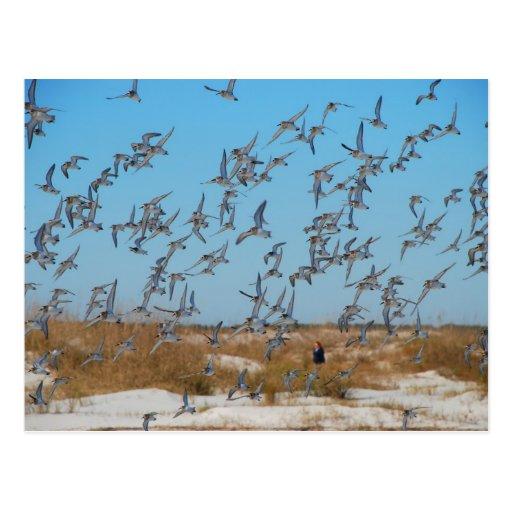 Gaviotas del vuelo en la playa de la Florida Postal
