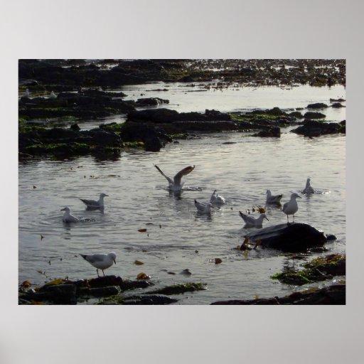 Gaviotas en bahía póster