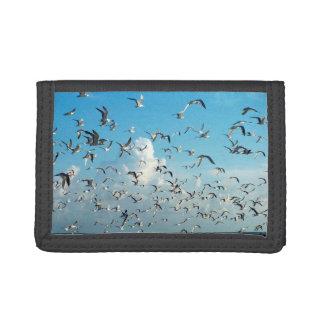gaviotas en cielo sobre pájaros de la entrada