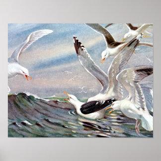 Gaviotas en el océano posters