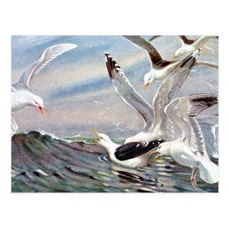 Gaviotas en el océano tarjetas postales