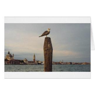 Gaviotas en Italia Venecia Tarjeta De Felicitación