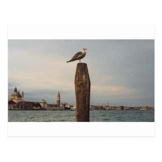 Gaviotas en Italia Venecia Tarjeta Postal
