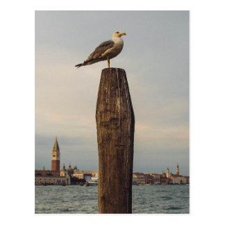 Gaviotas en Italia Venecia Tarjetas Postales