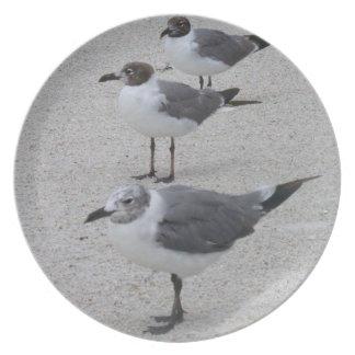 Gaviotas en la placa de la playa platos