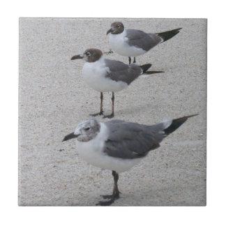 Gaviotas en la playa azulejo cuadrado pequeño