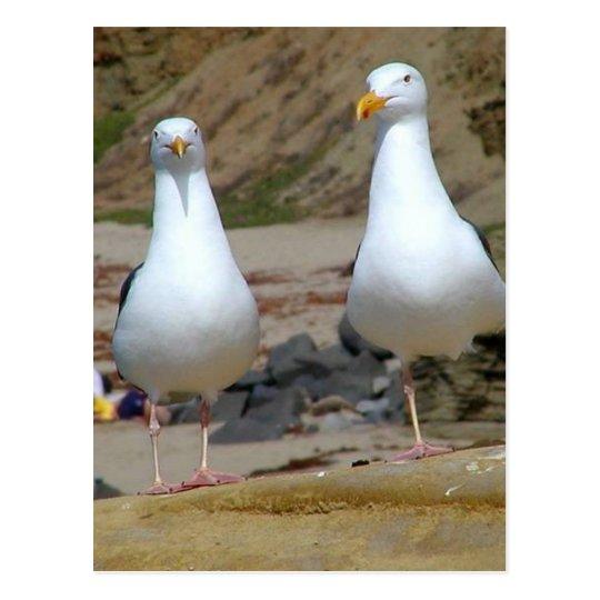 Gaviotas en la playa de los océanos tarjetas postales