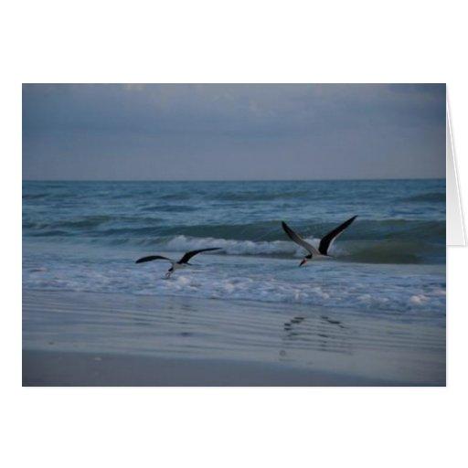 Gaviotas en la playa, isla de Marco, la Florida, 2 Tarjeta De Felicitación