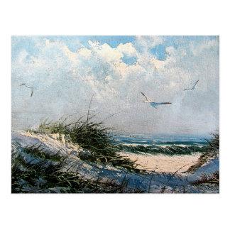 Gaviotas en la playa postal