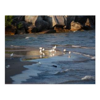 Gaviotas en la playa tarjeta postal