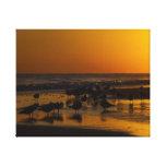 Gaviotas en la puesta del sol lienzo envuelto para galerías