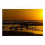 Gaviotas en la puesta del sol postales