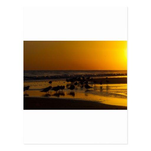 Gaviotas en la puesta del sol tarjeta postal