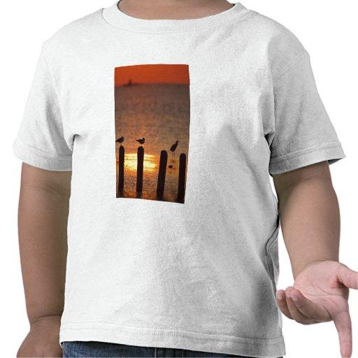 Gaviotas en las virutas en Laguna Madre, Padre del Camiseta