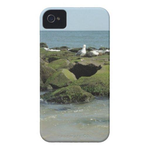 Gaviotas en rocas iPhone 4 protectores