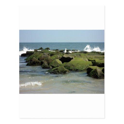 Gaviotas en rocas postal