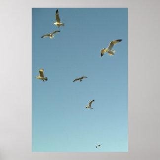 Gaviotas en vuelo poster