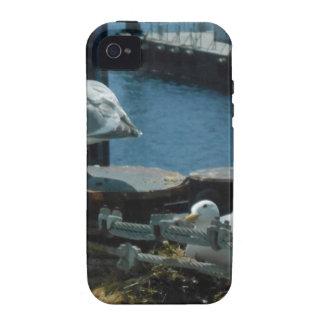 Gaviotas iPhone 4 Carcasas
