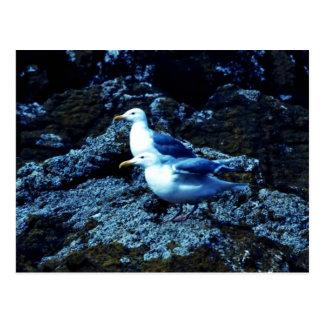 gaviotas Glauco-coas alas Postales