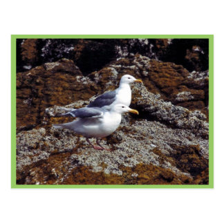 gaviotas Glauco-coas alas Postal