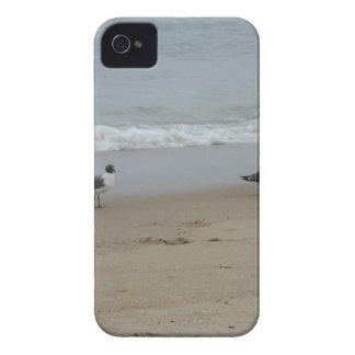 Gaviotas iPhone 4 Cobertura