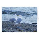Gaviotas que se besan en la foto de la playa tarjetas