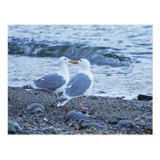 Gaviotas que se besan en la foto de la playa tarjetas postales
