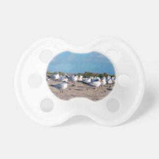 Gaviotas que se colocan en nivel del ojo de la chupetes para bebés