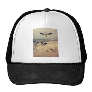 Gaviotas que vuelan en la playa gorras de camionero