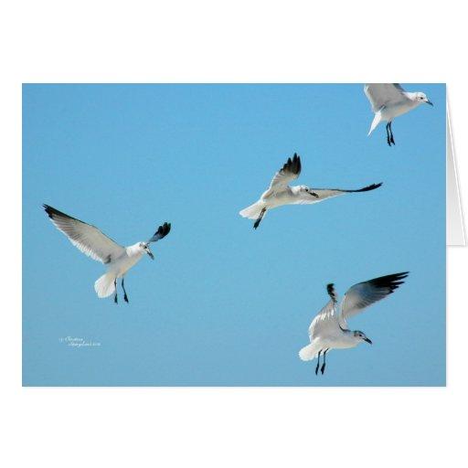 Gaviotas que vuelan la tarjeta de felicitación