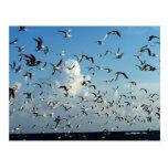 gaviotas que vuelan sobre la playa tarjetas postales