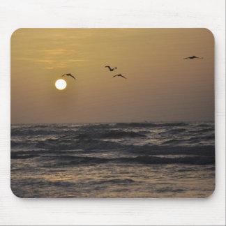 Gaviotas y puesta del sol en la costa de Tejas Alfombrilla De Raton