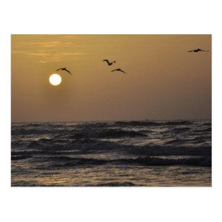 Gaviotas y puesta del sol en la postal de la costa