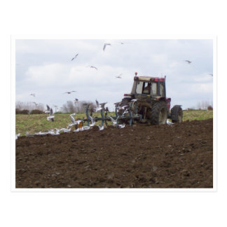 Gaviotas y tractor postal
