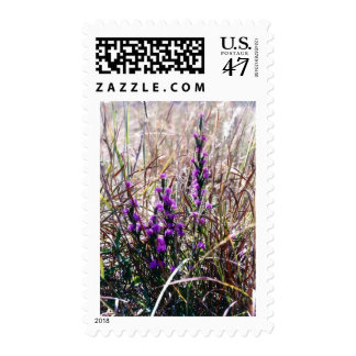 Gay Feather Postage