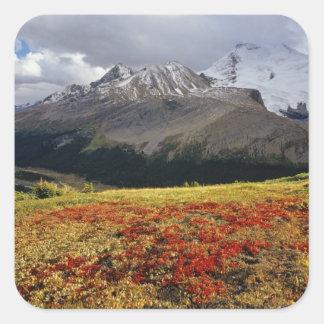 Gayuba en el pico temprano de Athabasca del otoño Pegatina Cuadrada