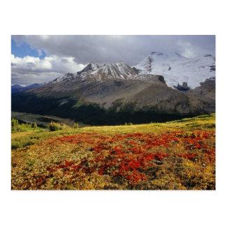 Gayuba en el pico temprano de Athabasca del otoño Postales