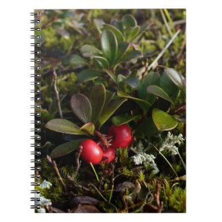 Gayuba, uva-ursi del arctostaphylos cuaderno
