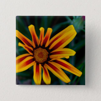 Gazania flower button