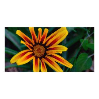 Gazania flower card