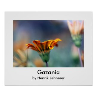 Gazania print
