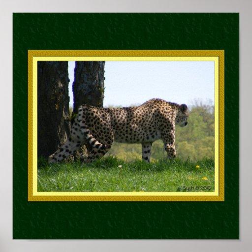Gaze of the Cat: Cheetah #2 Print