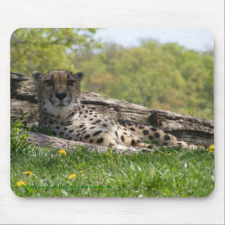 Gaze of the Cat: Cheetah Mouse Pad