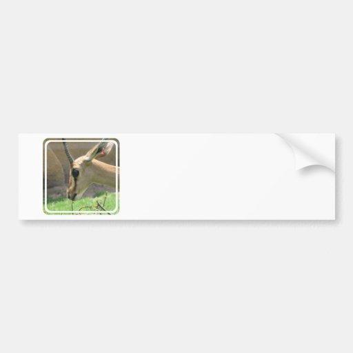 Gazelle Bumper Stickers
