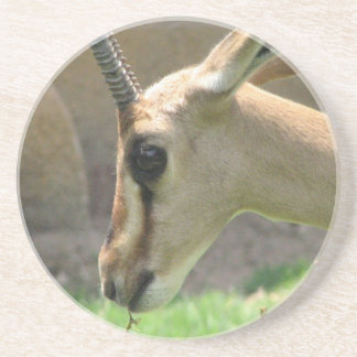 Gazelle Coaster