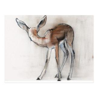 Gazelle Fawn Postcard